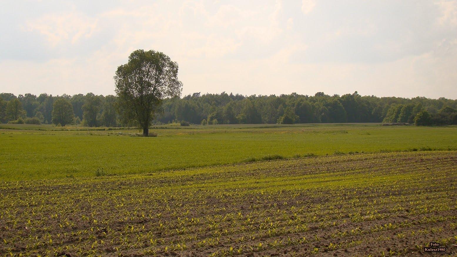 Kiełpiniec-Nabużański-Park-Krajobrazowy-28