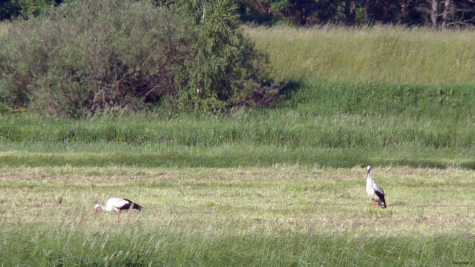Kiełpiniec-Nabużański-Park-Krajobrazowy-52