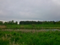 łąki kiełpiniec