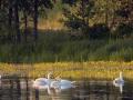 Kiełpiniec-Nabużański-Park-Krajobrazowy-25