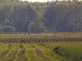 Kiełpiniec-Nabużański-Park-Krajobrazowy-30