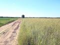 Kiełpiniec-Nabużański-Park-Krajobrazowy-62
