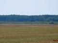 Kiełpiniec-Nabużański-Park-Krajobrazowy-64