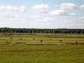 Kiełpiniec-Nabużański-Park-Krajobrazowy-75