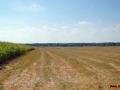 Kiełpiniec-Nabużański-Park-Krajobrazowy-79
