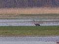Kiełpiniec-Nabużański-Park-Krajobrazowy-80