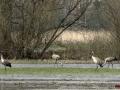 Kiełpiniec-Nabużański-Park-Krajobrazowy-85