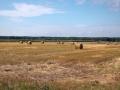 Kiełpiniec-Nabużański-Park-Krajobrazowy-94