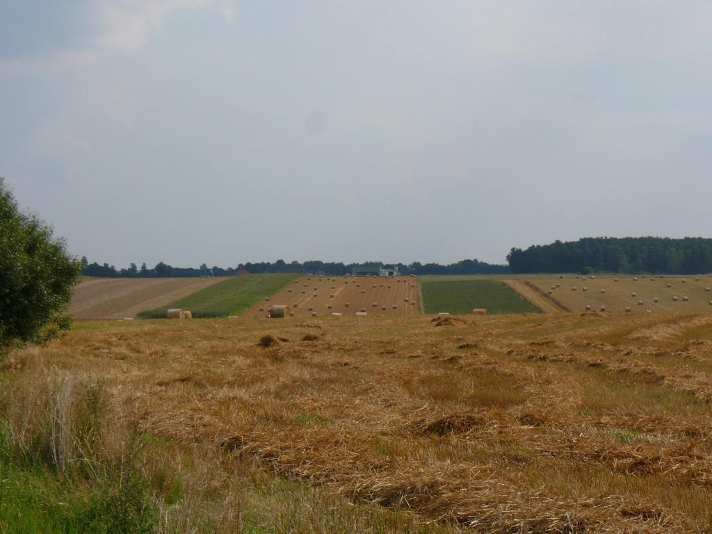 Pola i łąki Podlaskie