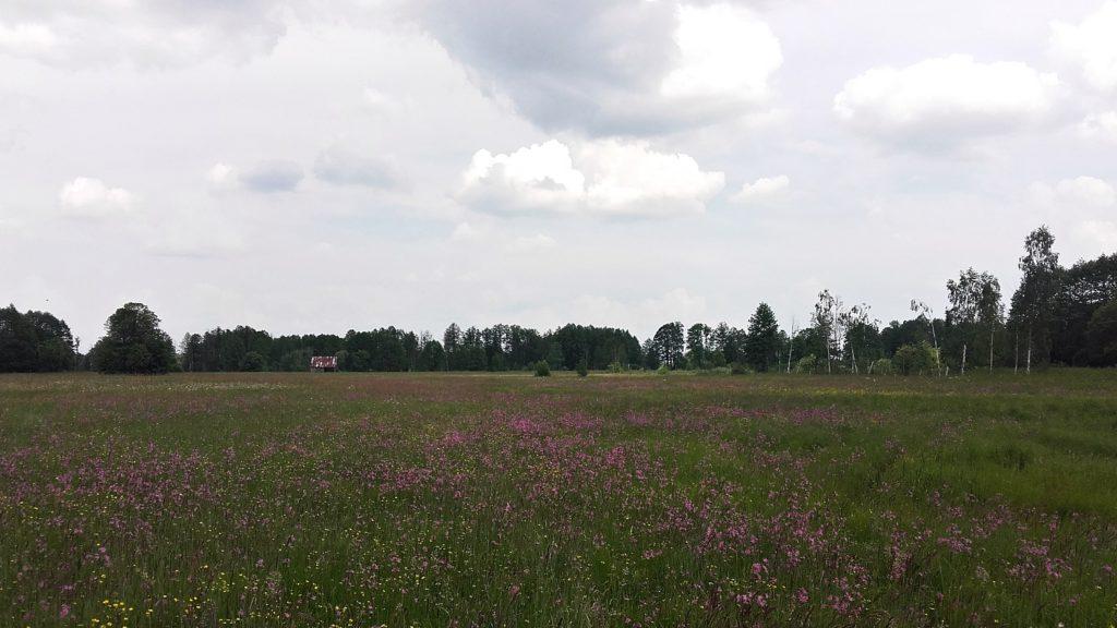 piękny widok na łąki przy kiełpińcu
