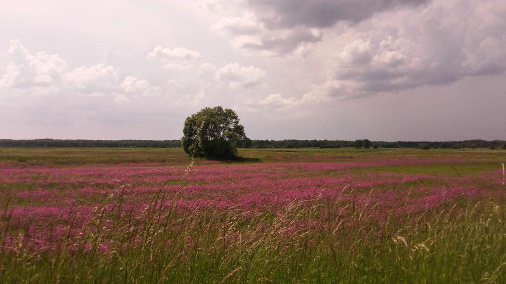 ląki we wsi kiełpiniec