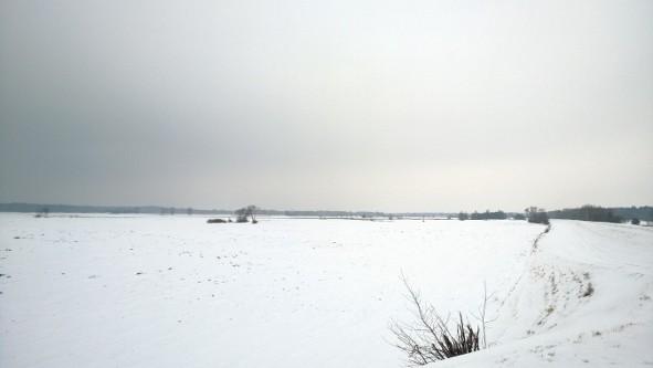 Kiełpiniec zimą
