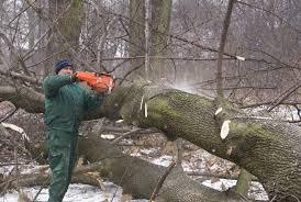 Jak to jest z tą wycinką drzew?