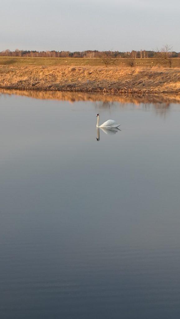 nad jeziorem w Kiełpińcu