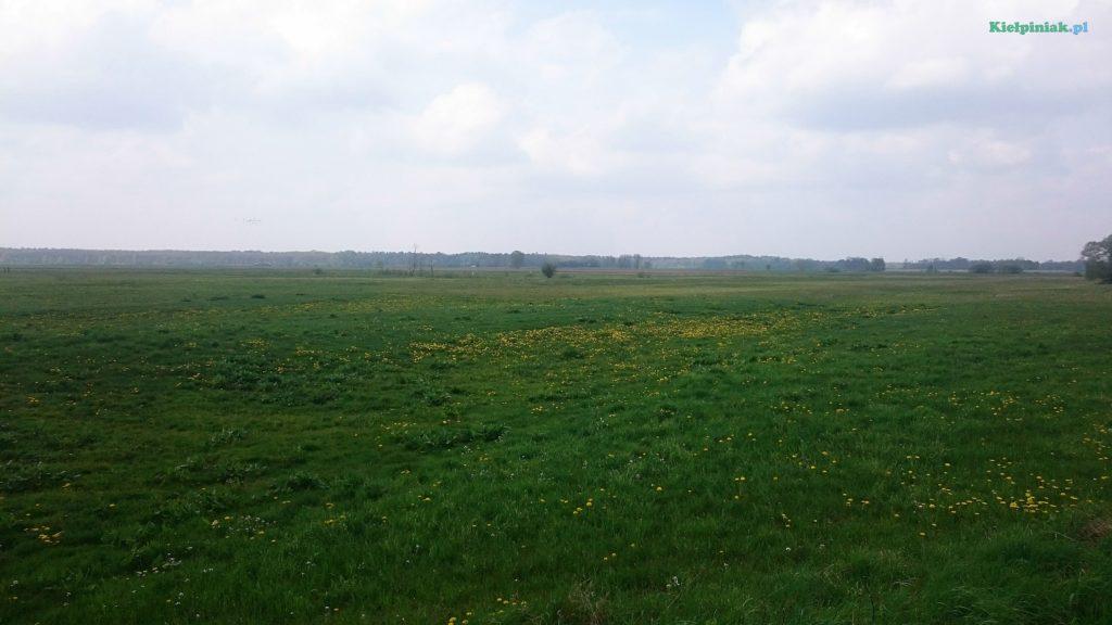 pola i łąki przy kiełpińcu w maju 2017