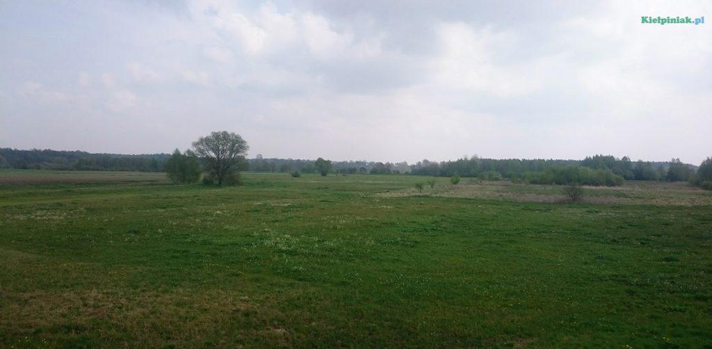 npk rozkwita w maju a kiełpiniak uwiecznia to na zdjęciach