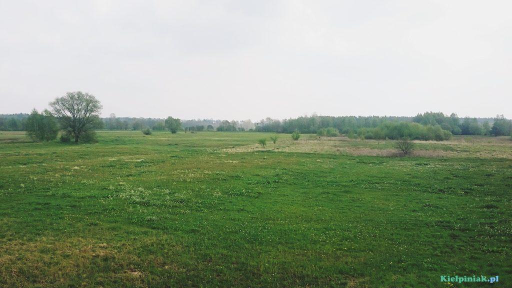 łąki przy wale