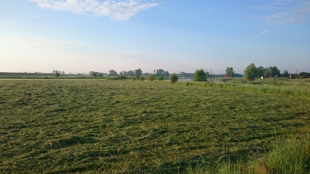 łąka w kiełpińcu