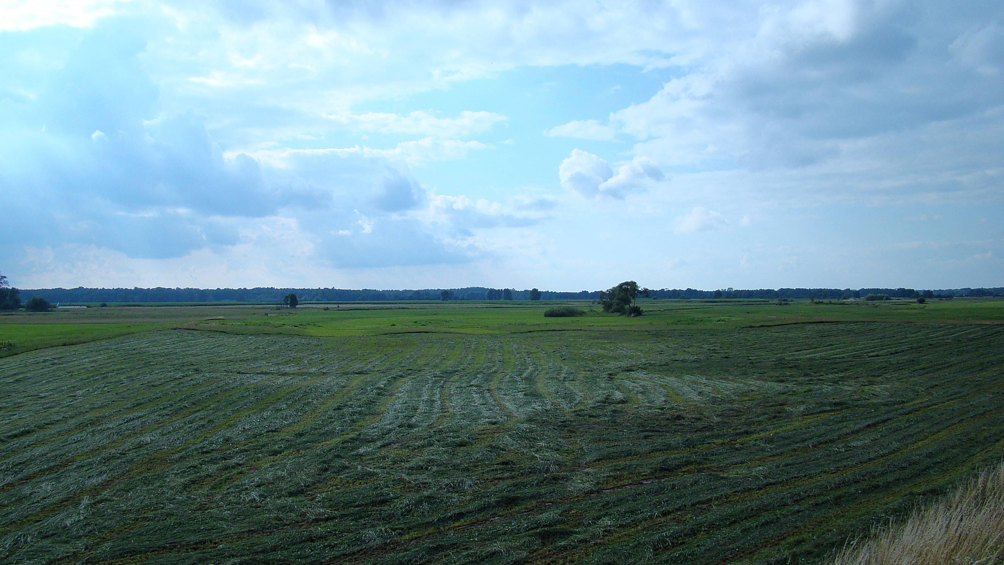 łąki przy Bugu we wsi kiełpiniec