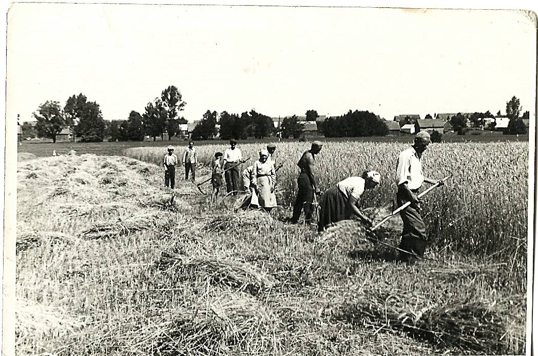 stare zdjęcia żniwa na wsi