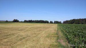 kiełpiniec czerwiec 2018 pola i łąki nad Bugiem