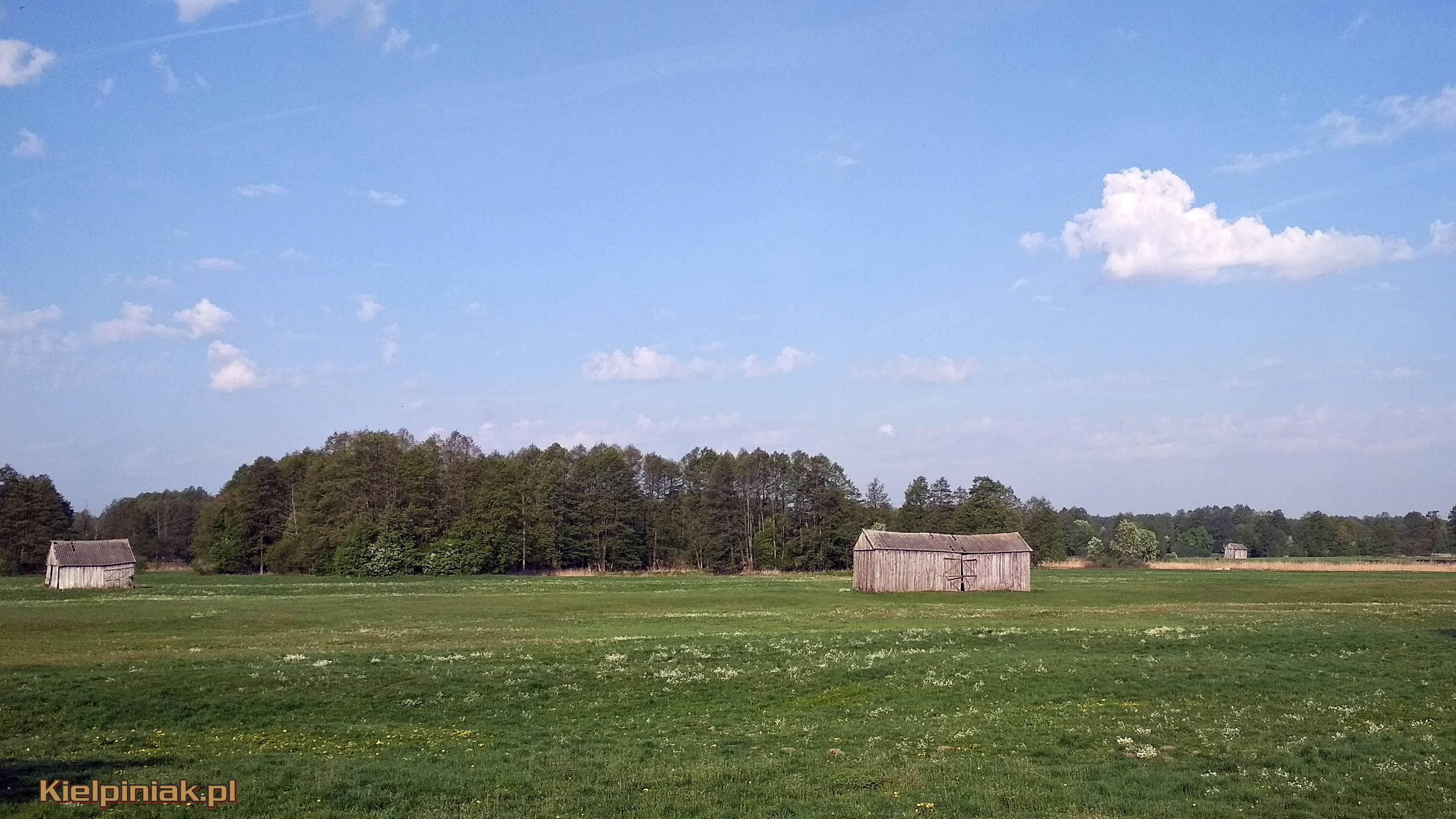 Nadbuzański Park Krajobrazowy łąki przy drodze do kiełpińca