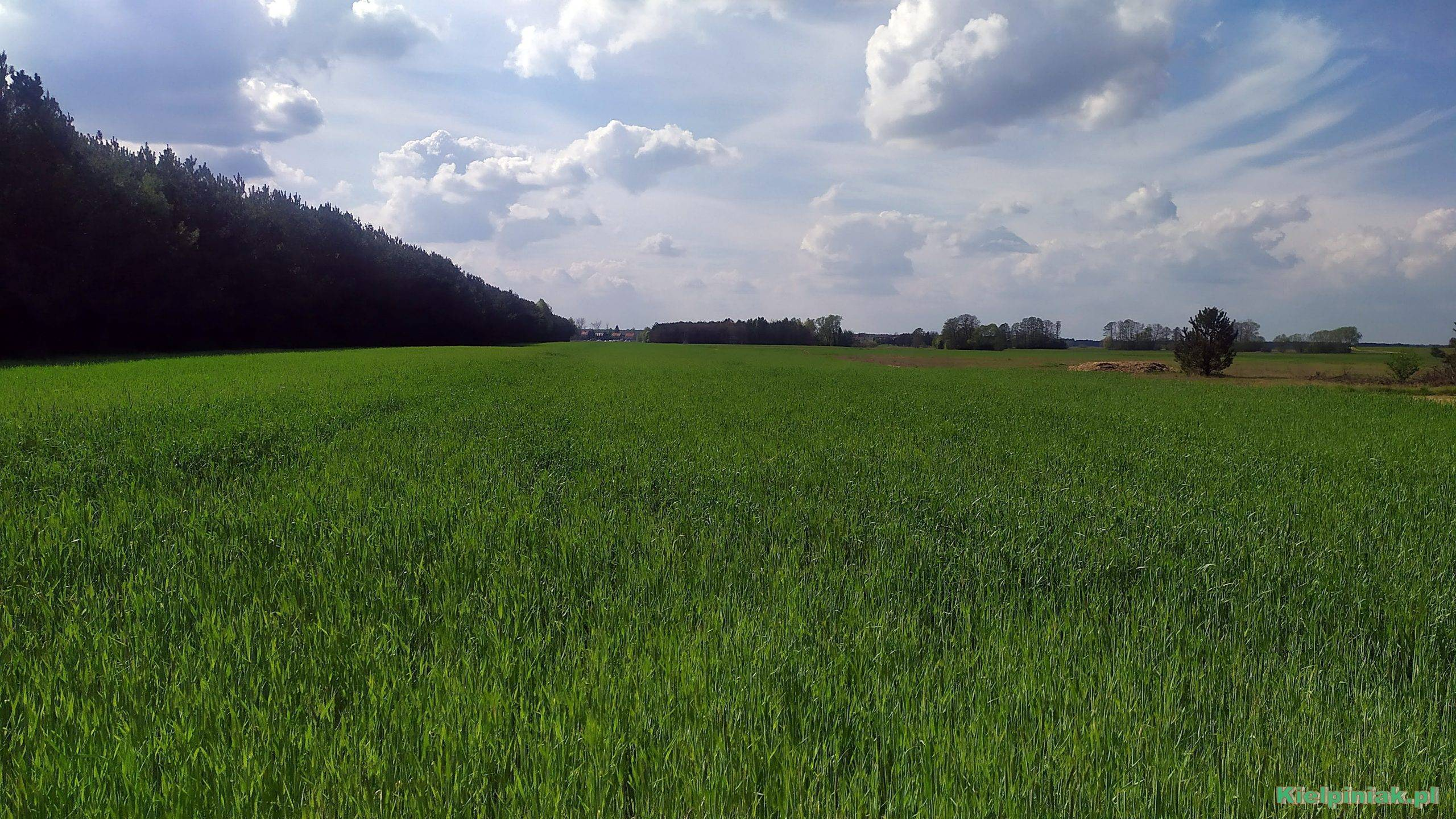 Polskie pola i łąki, NPK w okolicy kiełpińca ,a maj 2020
