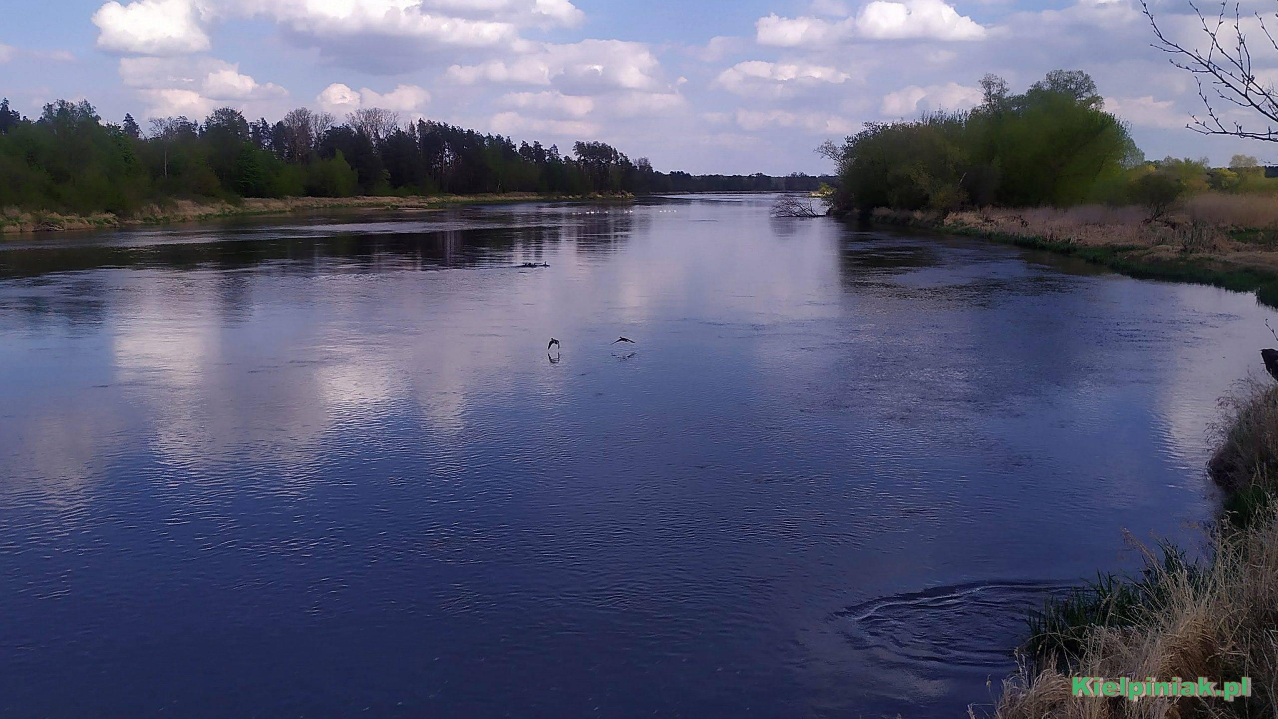 rzeka Bug w okolicy Młynarzy, wystraszyłem 2 dzikie kaczki, w odali po lewej stronie odpłyneły też łabędzie...