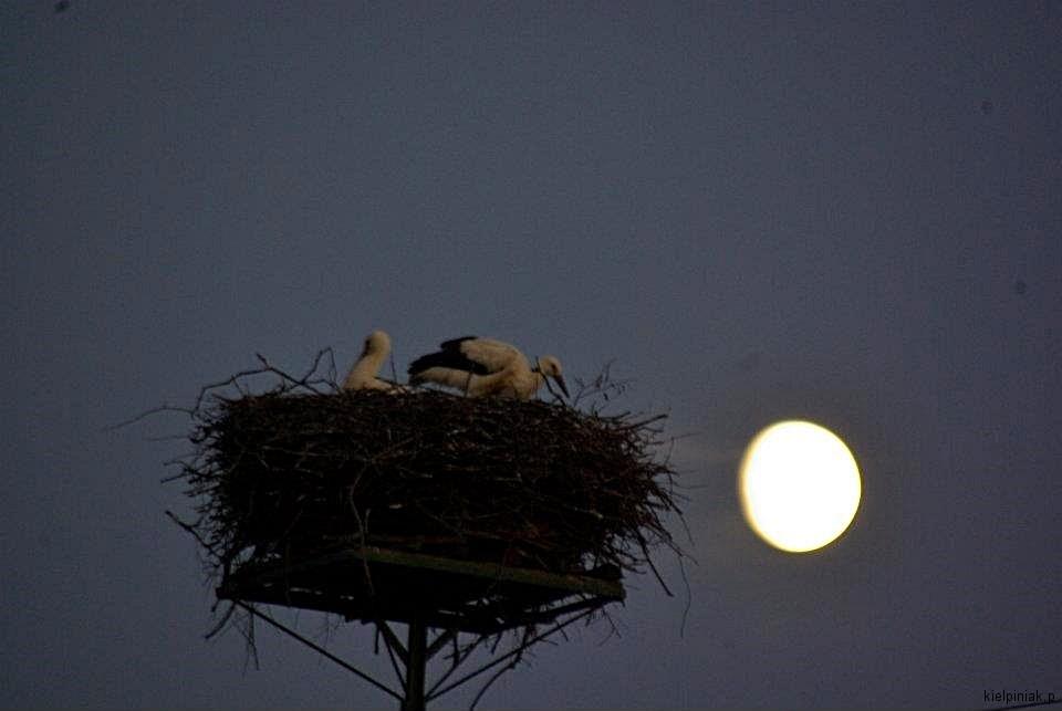 pełnia księżyca, bociany