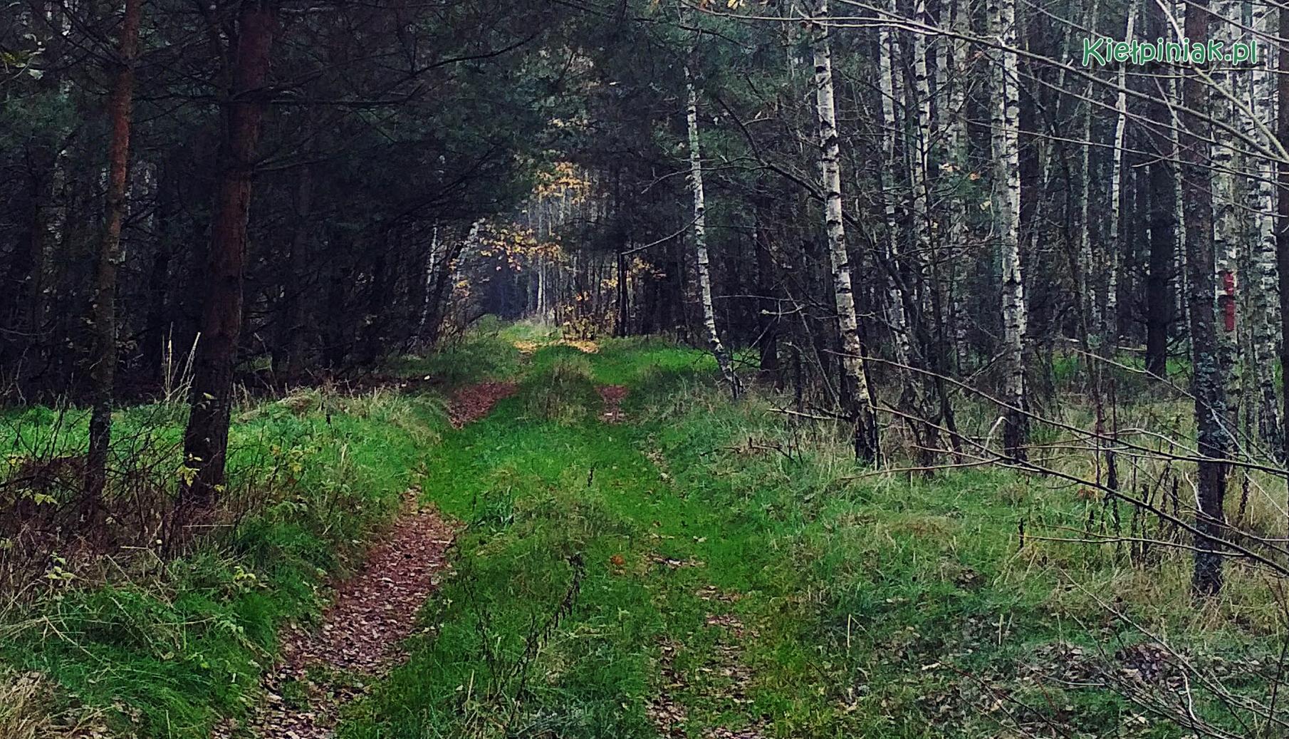 nadbuzanski park krajobrazowy w okolicy kielpinca