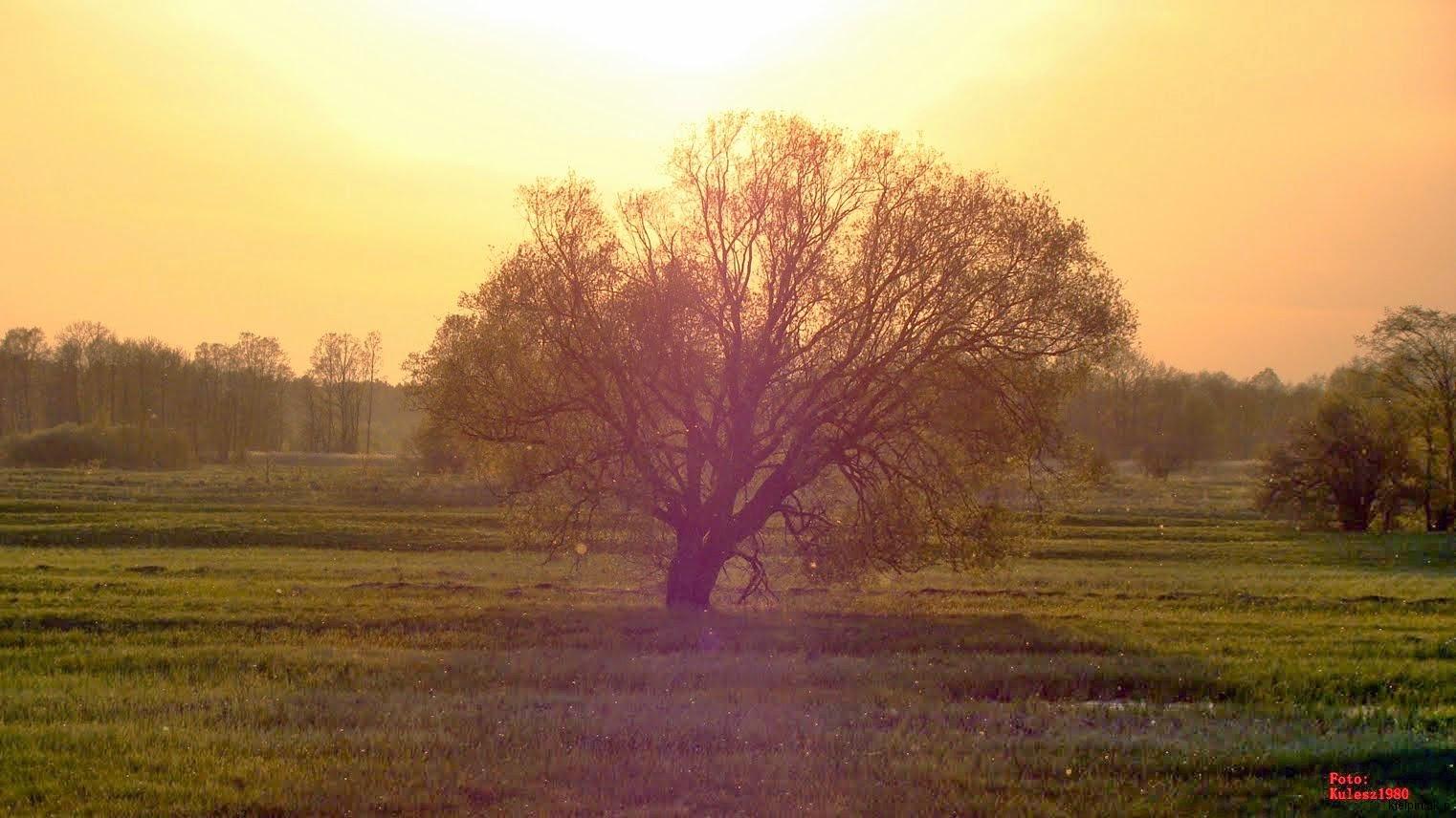 drzewo-zach