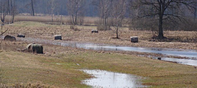 Wiosna w Nadbużańskim Parku Krajobrazowym