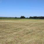 kiełpiniec czerwiec 2018 pola i łąki nad Bugiem 2