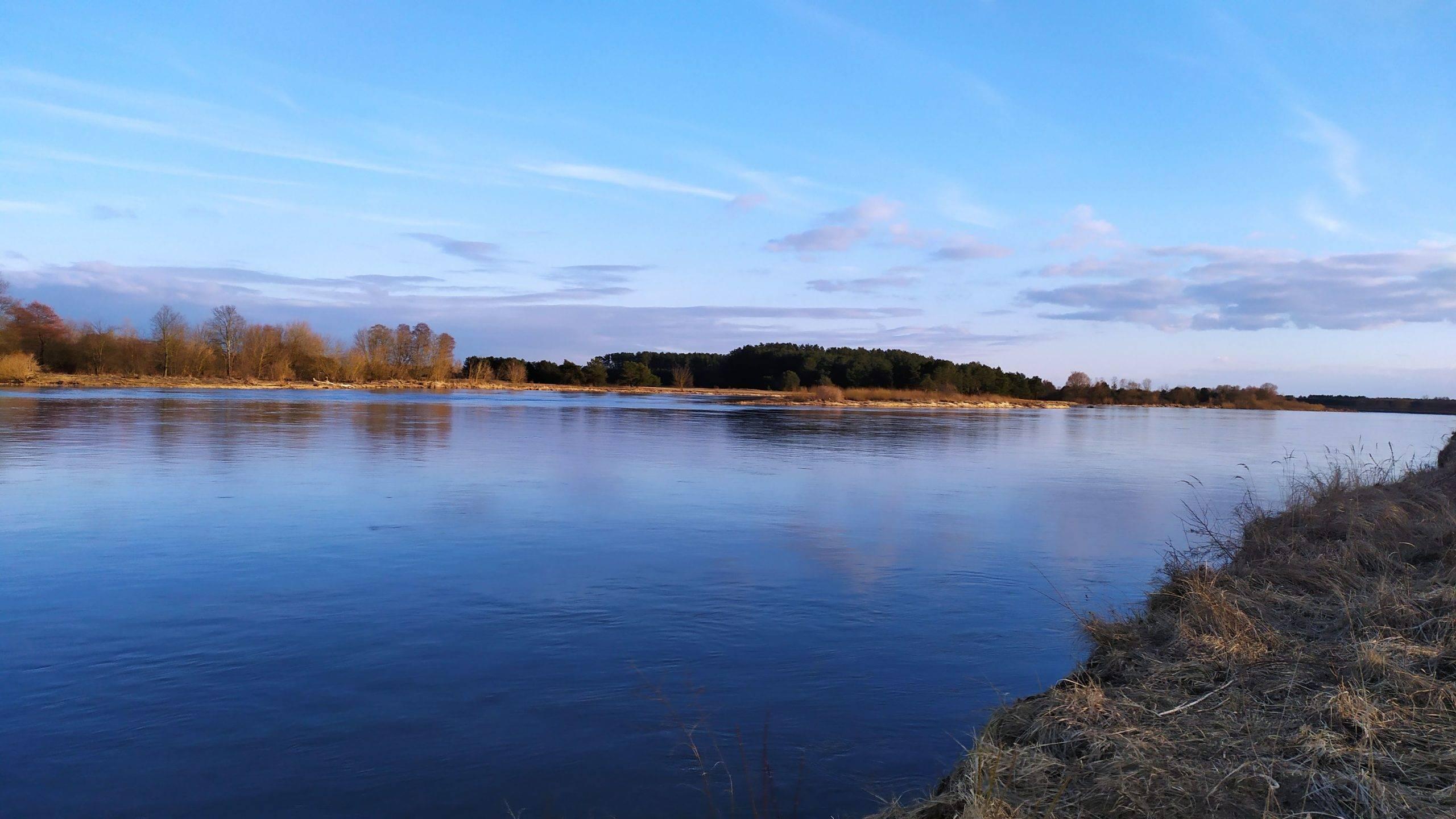 Wysoki poziom wody na rzece Bug